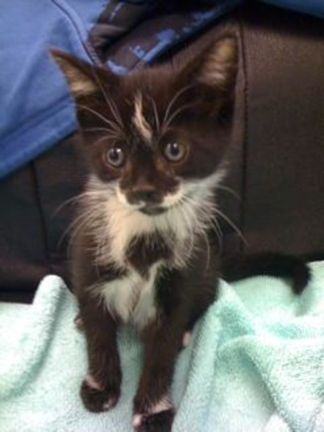 Declawed Cats For Adoption In Connecticut