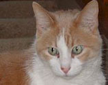 Click to view our many cats ready for adoption